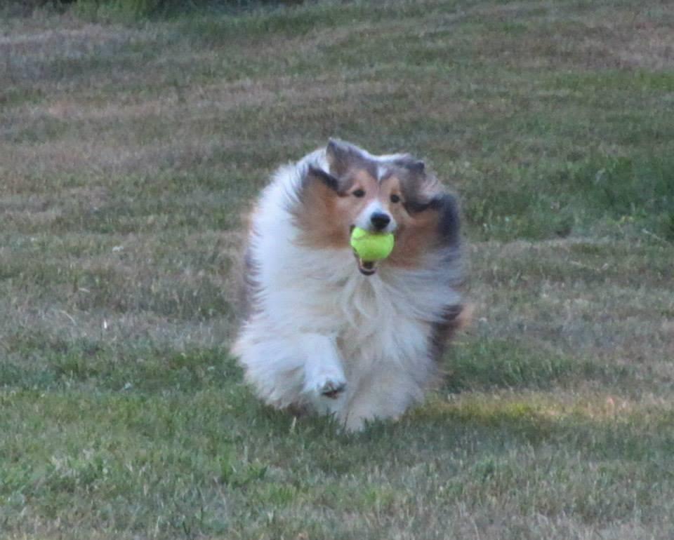 Critter Calls - Fetching!