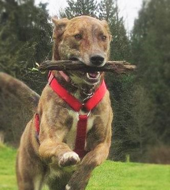 Critter Calls - Selah and her stick